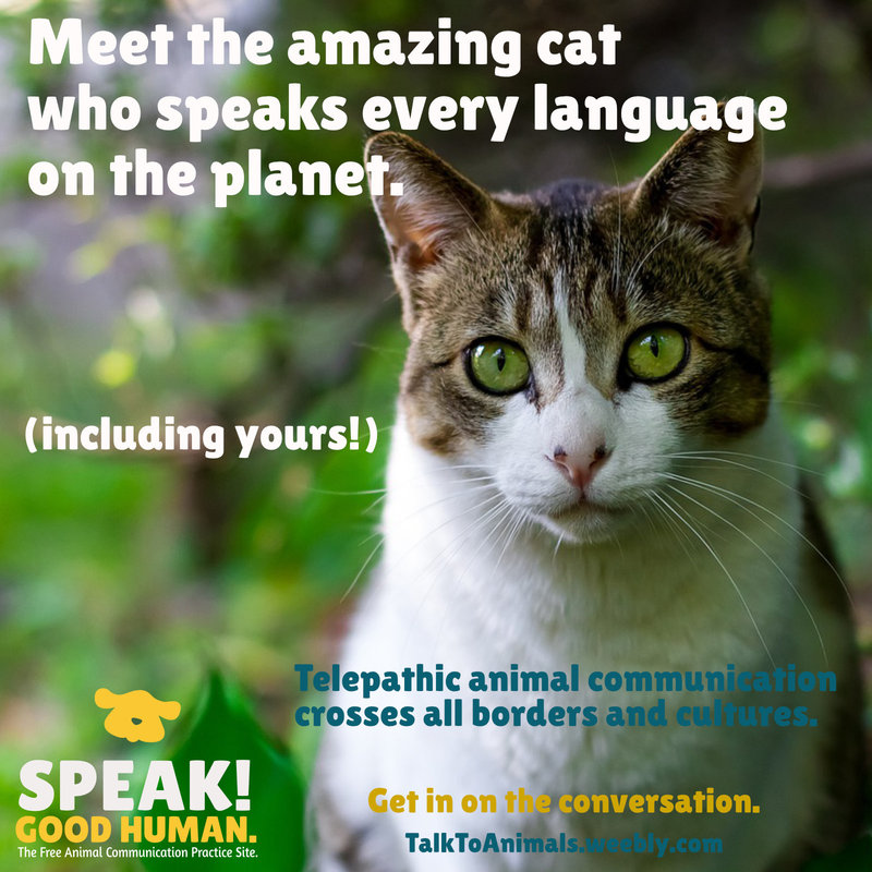 Animal communication works anywhere in the world, no matter which language you speak.