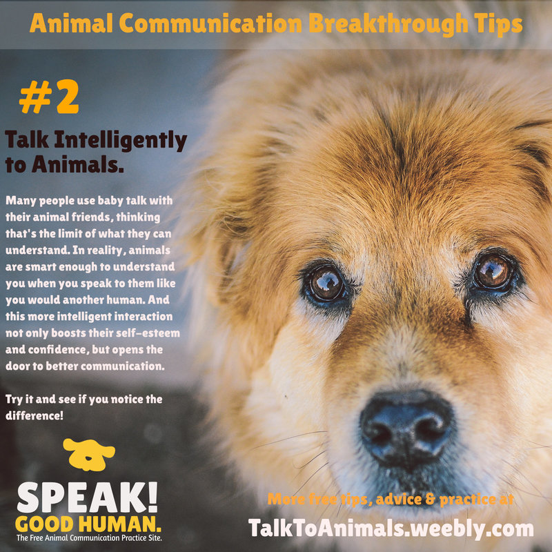 Talk intelligently with animals when communicating with them