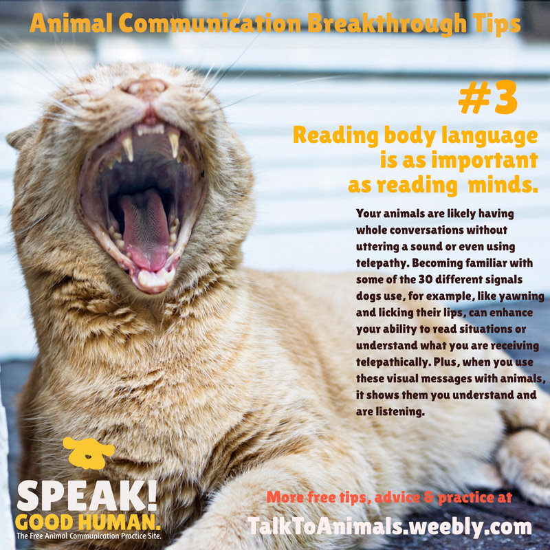 Reading body language is as important as telepathy in animal communication