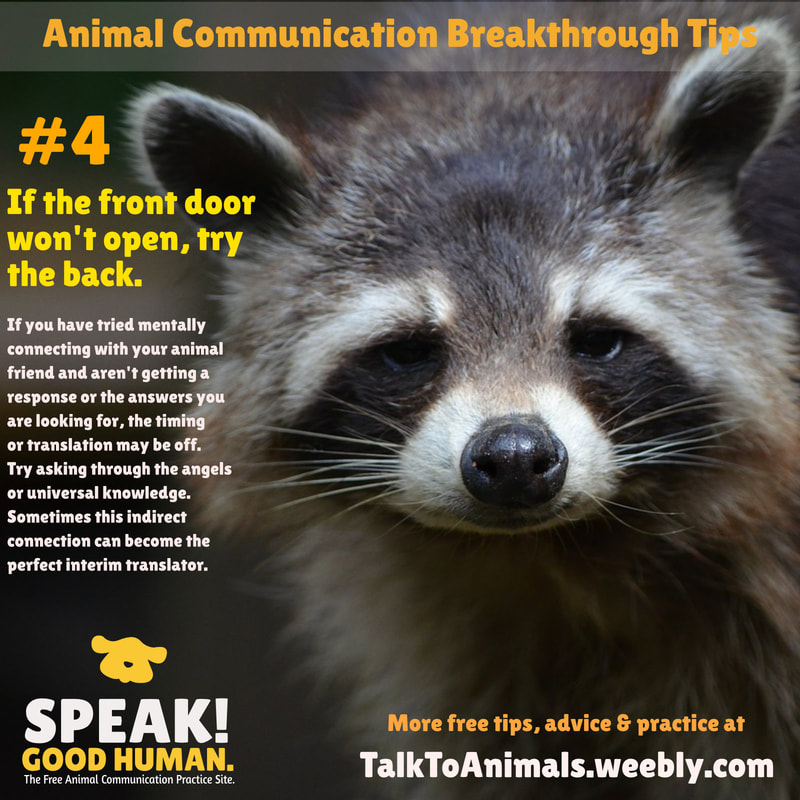 There's more than one way to communicate with animals