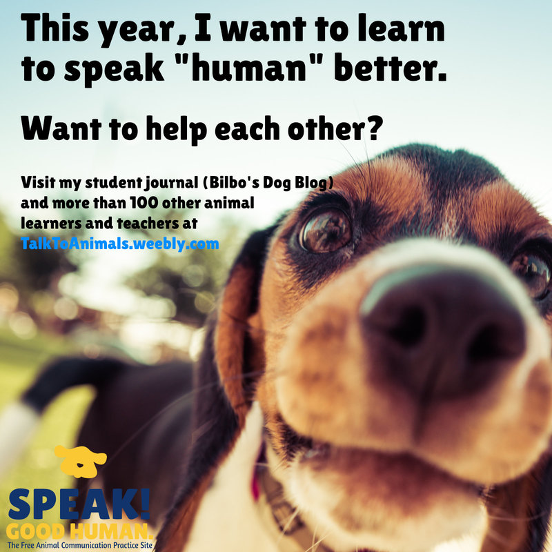 Check out the animal communication blog by a dog!