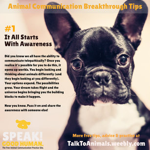 Animal Communication starts with awareness