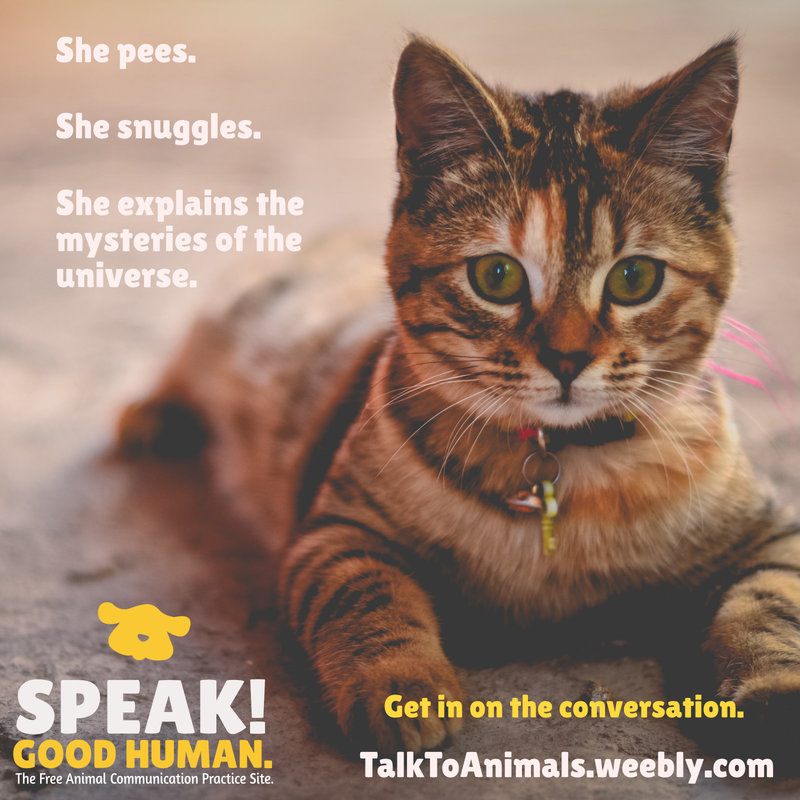 Get in on the conversation at Speak! Good Human.