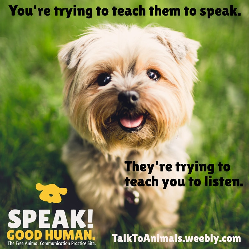 Your animals want you to start listening!