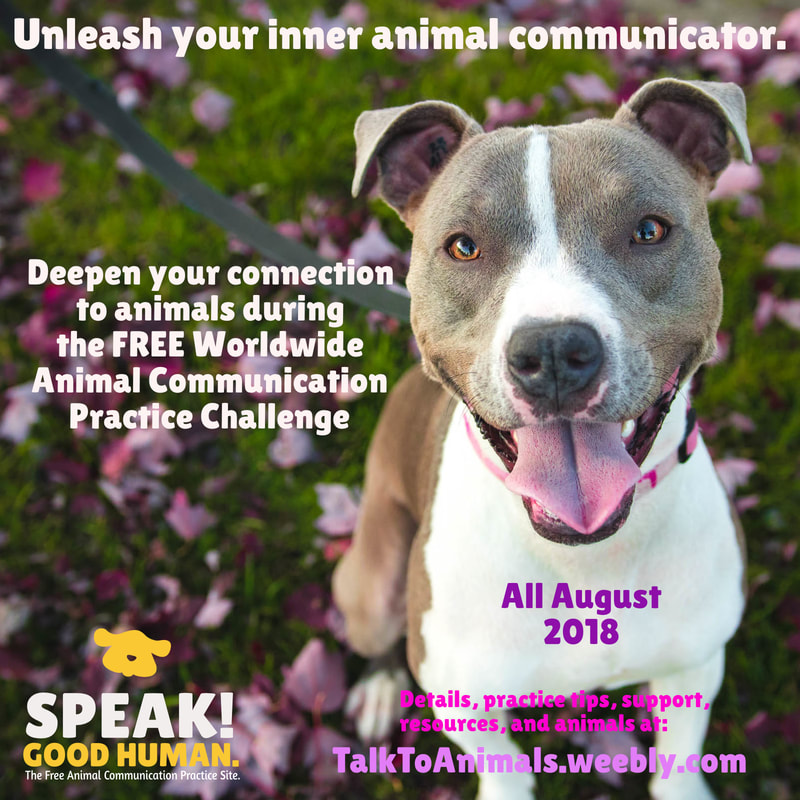 Unleash your inner animal communicator. It's in there!